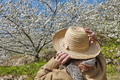 Woman looking up cherry blossom in Jerte Valley, Caceres. Spain. Season - PhotoDune Item for Sale