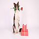 Border Collie Dog Sitting Up on Her Hind Legs Next to Holiday Gifts - VideoHive Item for Sale