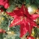 Christmas Tree with Bows - VideoHive Item for Sale