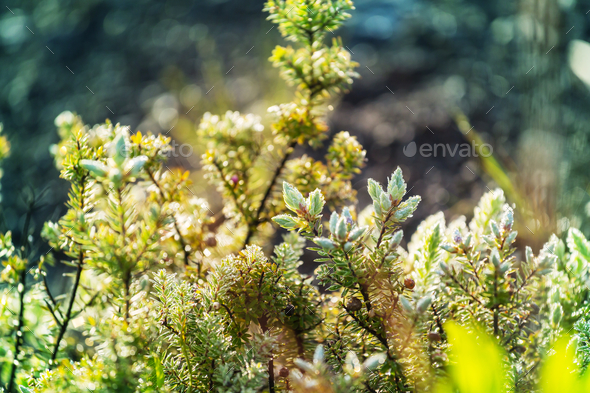 Flora - Stock Photo - Images