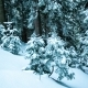 Beautiful Winter Landscape with Snow Covered Trees. Winter Mountains - VideoHive Item for Sale