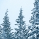 Beautiful Winter Landscape with Snow Covered Trees in the Mountains - VideoHive Item for Sale
