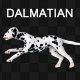 Dalmatian Dog Run  - VideoHive Item for Sale