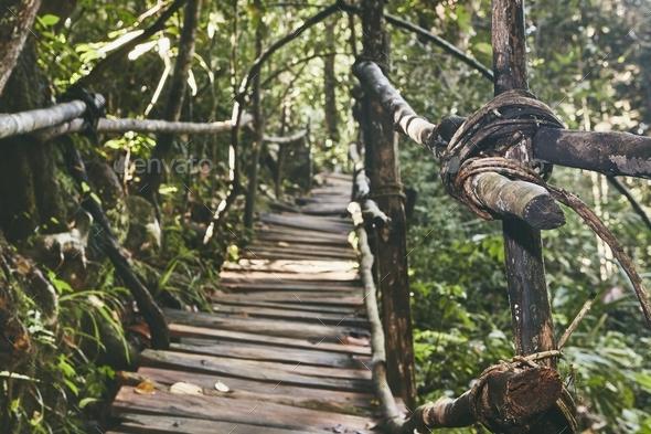 Walkway through jungle - Stock Photo - Images