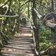 Walkway through jungle - PhotoDune Item for Sale