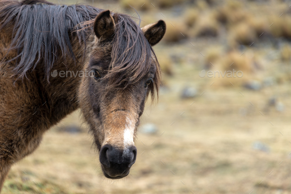 View of a Horse in Bolivia - Stock Photo - Images