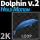 Dolphin 2 - VideoHive Item for Sale