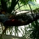 Young Woman Reading Book Lying on Hammock - VideoHive Item for Sale