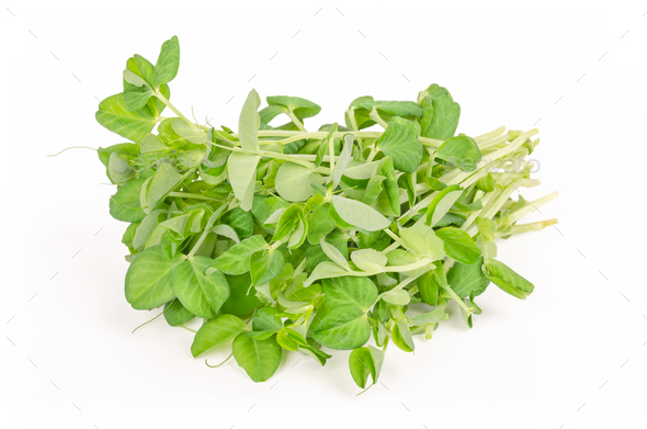 Bunch of snow pea microgreen front view - Stock Photo - Images
