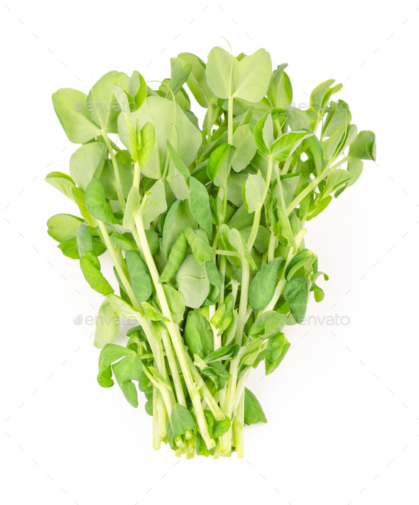 Bunch of snow pea microgreen from above - Stock Photo - Images