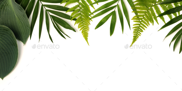 frame of green leaves - Stock Photo - Images
