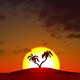 Growing Palm Trees At Sunrise - VideoHive Item for Sale
