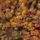 Flight Over Autumn Forest - VideoHive Item for Sale