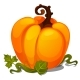 Ripe Pumpkin Isolated on White Background - GraphicRiver Item for Sale