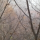 Dull Autumn Scene of Bare Trees and Snow with Rain - VideoHive Item for Sale