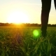 Female Legs in Jeans Walking on a Green Lawn Against a Sunset Background - VideoHive Item for Sale