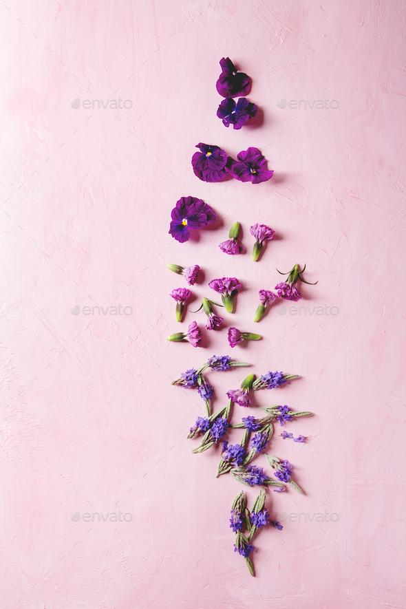 Purple edible flowers - Stock Photo - Images