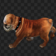 Buldog Walk Top - VideoHive Item for Sale