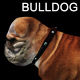 Bulldog Walk - VideoHive Item for Sale