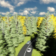 Road among the Forest - VideoHive Item for Sale