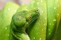 Green snake - PhotoDune Item for Sale