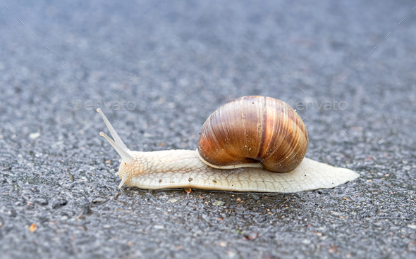 snail on asphalt - Stock Photo - Images