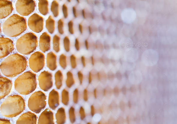 texture of honeycomb - Stock Photo - Images