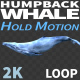 Humpback Whale 1 - VideoHive Item for Sale
