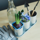hyacinth mix plant, gardening tools, gloves and glass bottle with water - PhotoDune Item for Sale
