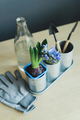 hyacinth mix plant, gardening tools, gloves and glass bottle with water