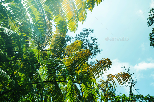 Fern - Stock Photo - Images