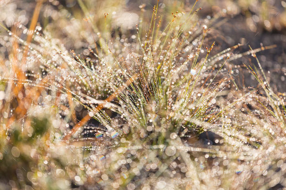 Wet grass - Stock Photo - Images
