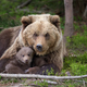 Brown bear with cub in forest - PhotoDune Item for Sale