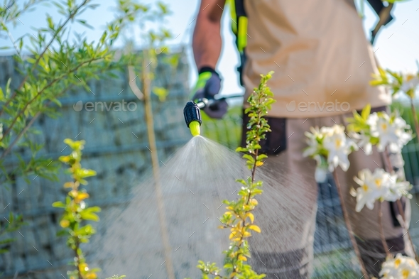 Plants Health Care - Stock Photo - Images