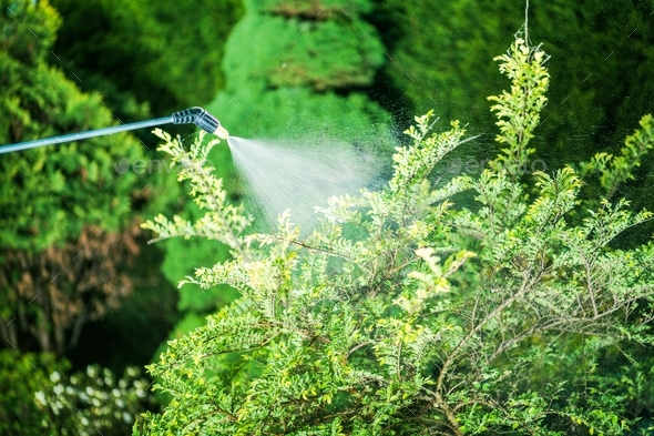 Insecticide in the Garden - Stock Photo - Images