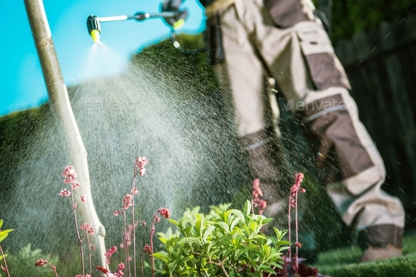 Fighting Insects in the Garden - Stock Photo - Images