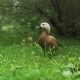 Duck in the Meadow. A Duck Walks in the Park in the Meadow - VideoHive Item for Sale