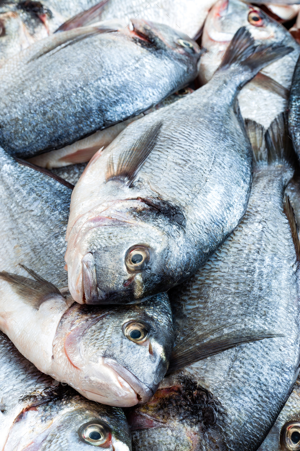 Fish. Fresh sea bream. Raw dorado fish - Stock Photo - Images