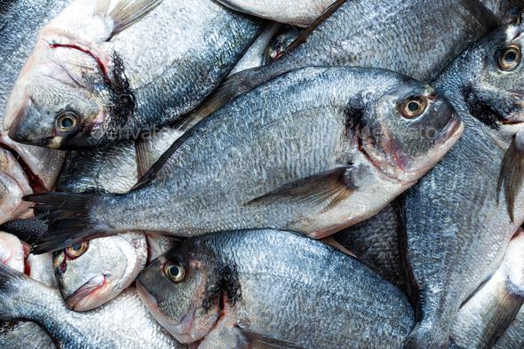 Fish. Fresh sea bream. Raw dorado fish - Stock Photo - Images