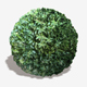 Bush Seamless Texture