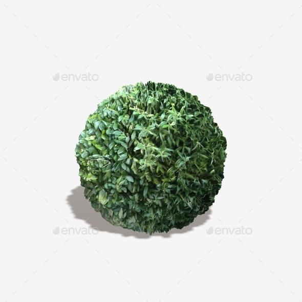 Bush Seamless Texture