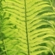 Perfect Natural Fern Pattern. Beautiful Background Made with Young Green Fern Leaves - VideoHive Item for Sale