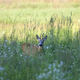 Buck deer in a clearing  - PhotoDune Item for Sale