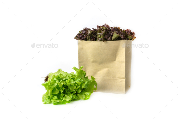 Grocery bag with fresh hydroponics vegetables isolated on white - Stock Photo - Images