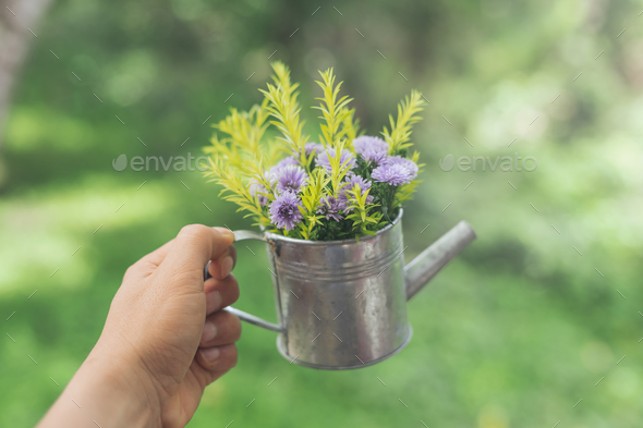 Hand holding decorate flowers in pot - Stock Photo - Images