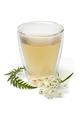 Cup of healthy cow parsley tea - PhotoDune Item for Sale