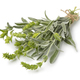 Bunch of fresh green ironwort - PhotoDune Item for Sale