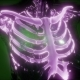 Human Body with Visible Skeletal Bones - VideoHive Item for Sale