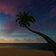 Coconout Tree Silhouettes At Sandy Beach - VideoHive Item for Sale