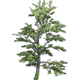 Tree Growing - VideoHive Item for Sale
